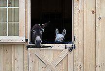 Donkey Planning