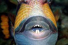 Marine animals        / Marine animals; from fish to crustaceans and chorals