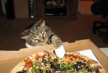 Funny Cat Video / Funny Cat Video