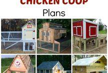chicken coop heaven