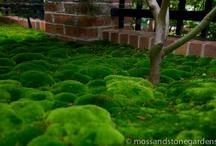 Moss garden