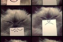 Kissakivaa :D