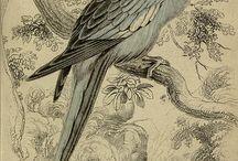 zoology-birds