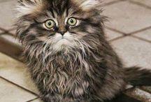 кошки / о кошках