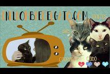 Vídeos de Gatos-En el Nombre del Gato TV / Vídeos protagonizados por Gatos, gatos y más gatos. Gatos sesudos, gatos divertidos, gatos ocurrentes, gatos al fin y al cabo. Creados por ENELNOMBREDELGATO.COM TV, y protagonizados por los sesudos Cooper, Cabo, Martes y Billy, y otras películas felinas con los Gatos más Sorprendentes de Internet.