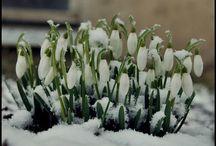 wiosna/spring