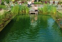 Přírodní bazen
