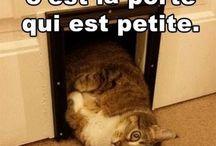 Citations drôles chats