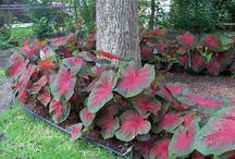 les plantes d'ombre