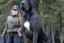 Nagy kutyák