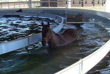 Equestrian technology