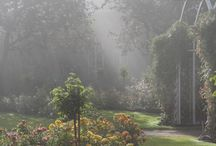 Puutarha/ Garden