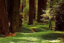 Heart of the Redwoods