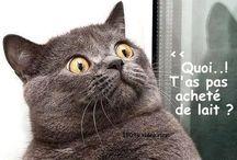 Les chats ont le sens de l'humour