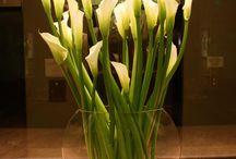Jardins e Decoração viva / O poder da cor, da flor, do paisagismo para influenciar a energia de casa.