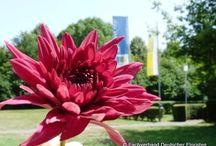Sommer im FloristPark