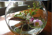 Autumn in the garden // høst i hagen