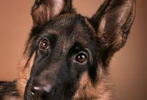 Dog-Hund