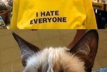 Grumpy Cat ☹
