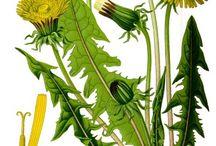 Nutz- und Heilpflanzen