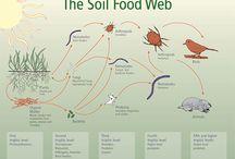 Soil / healthy living rich soil  / by Katie Downs