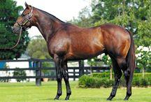 Racehorse Stallions