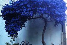 Puut, lehdet, metsä