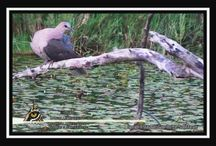 Bird Articles / Get to know your African Birds - Bird Articles by Prof J du P Bothma