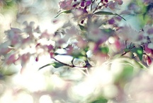 Blumen- Fotografie-