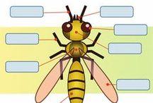 Body parts invertebrates