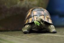Turtles / by Stephanie B.