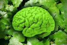 natural brain medicine, Centella asiatica, pennywort, indian gingseng, Ashwagandha, gotu kola, Marsh Pennywort, pegagan