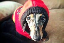 Warm Pets!