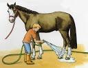 HIPOTERAPIA (Terapia asistida con caballos) / Objetivos:Integración sensorial,Disminuir la ansiedad,Mejorar capacidad de atención,Estimular comunicación verbal,Mejora la comprensión y disposición de actividades,Estimular toma de contacto con personas y animales,Estimular afectividad y estabilidad emocional,Mejorar postura,Mejorar coordinación e Incentivar el juego.