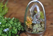 Terrarium Jewelry / by Kelly O'Donnell