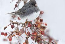 Winter Beauty / by Erin Chadwick