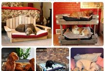 Pallets for Pets!