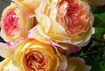 Flower lust