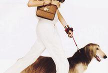 Fashion afghan hounds