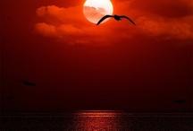 sunrise/sunset / by Pamela Redsicker