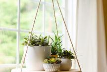 Maceteros y plantas