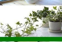 planter inne for helsen