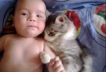 adorable kitty and the baby