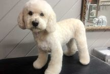 Grooming Gallery Here At Tailspin Dog Spa