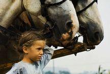 Horse / Horses. / by Mary M.