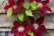 blomster i overflod og farver
