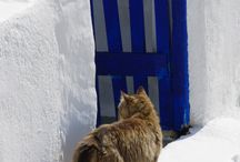 Greek Cats / Greek cats are worldwide famous to enjoy the warm sun on the amazing white roofs of outstanding luxury villas. Check our website to find the villa of your dream ! www.mygreek-villa.com