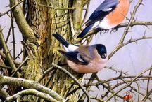 vogels alle soorten