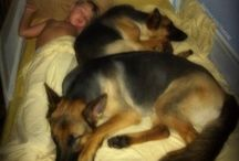 Dogs / Dog