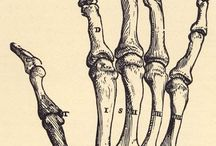 Illustration - Anatomy